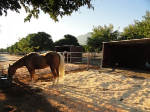 Paddocks with 3 Sided Shelters